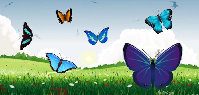 _light-1784-llegaron-mariposas-lionzer-p